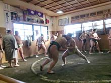 相撲部屋見学会写真